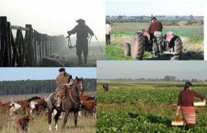 Trabajador Rural, muertes y su Seguridad Laboral